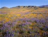 Wildflowers Bloom Beneath The Caliente Range, California Art Print