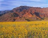 Black Mountains And Desert Sunflowers, Death Valley NP, California Art Print