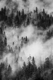 Swirling Forest Mist, Yosemite NP (BW) Art Print