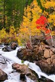 Autumn Along Bishop Creek Art Print