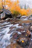 Rushing Water Along Bishop Creek Art Print