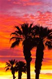 Silhouetted Palms At Sunrise Art Print