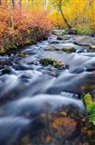 Autumn Colors Along Lundy Creek Art Print