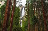 Yosemite Falls Through A Forest Art Print
