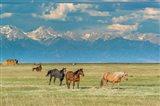 Heard Of Horses In Hayfield, San Luis Valley Art Print