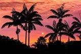 Sunset Through Silhouetted Palm Trees, Kona Coast, Hawaii Art Print