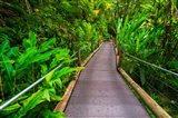 Trail At The Hawaii Tropical Botanical Garden Art Print