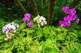 Orchids At The Hawaii Tropical Botanical Garden Art Print