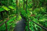 Boulder Creek Trail, Hawaii Art Print