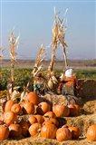 Pumpkin, hay bales, scarecrows, Fruitland, Idaho Art Print