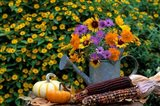 Autumn Display Of Flowers Art Print