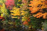 Autumn Trees Along The Sheepscot River, Maine Art Print