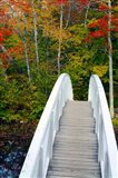 White Footbridge Path, Maine Art Print