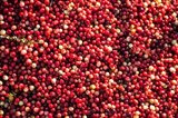 Cranberry Close-Up, Massachusetts Art Print