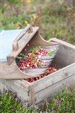 Cranberries And Scoop, Massachusetts Art Print