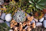 Cape Ann Succulents Art Print
