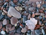 Maple Leaf And Rocks Along The Shore Of Lake Superior Art Print