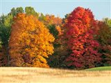 Autumn In The Upper Peninsula Of The Hiawatha National Forest Art Print