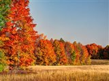 Fall Colors Of The Hiawatha National Forest Art Print