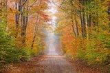 Autumn Road In Schoolcraft County, Michigan Art Print