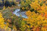 Autumn Color Along Divide Creek In Glacier National Park, Montana Art Print