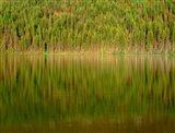 Conifer Forest Reflects In Kintla Lake, Montana Art Print