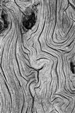 Detail Of Weathered Wood, Nevada Art Print