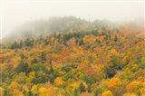 New Hampshire, White Mountain National Forest, Autumn Art Print