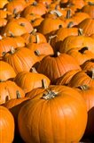 Pumpkins in the city of Concord, New Hampshire Art Print