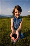 Blueberries, Alton, New Hampshire Art Print