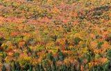 New Hampshire, White Mountains, Autumn Art Print