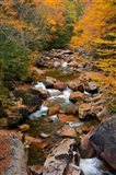 Liberty Gorge, Franconia Notch State Park, New Hampshire Art Print