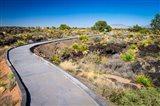 Malpais Nature Trail, New Mexico Art Print