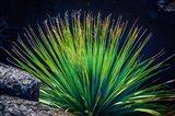 Succulent On Malpais Nature Trail, New Mexico Art Print