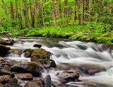 Water Flows At Straight Fork, North Carolina Art Print