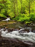 Siuslaw National Forest, Sweet Creek, Oregon Art Print