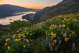 Wildflowers At Rowena Plateau,  Oregon Art Print