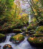 Mccord Creek In Autumn, Oregon Art Print