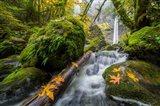 Autumn At Elowah Falls, Oregon Art Print