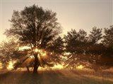 Sunrise Through Fog And Trees At Cades Cove Art Print