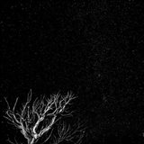 Dead Tree And Night Sky At The Capitol Reef National Park, Utah Art Print