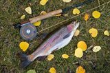 Rainbow Trout And Fly Rod Art Print