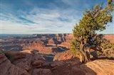 Juniper Tree At Dead Horse Point State Park Art Print