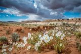 Evening Primrose In The Grand Staircase Escalante National Monument Art Print