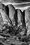 Gnarled Tree Against Stone Fins, Arches National Park, Utah (BW) Art Print