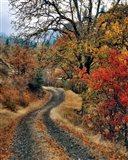 Road And Autumn-Colored Oaks, Washington State Art Print