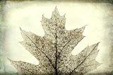 Oak Leaf Abstract Art Print