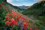 Wildflowers Above Badger Valley In Olympic Nationl Park Art Print