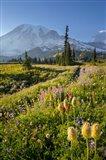 Paradise Area Landscape Of Mt Rainier National Park Art Print