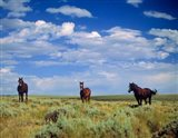 Wild Horses Near Farson, Wyoming Art Print